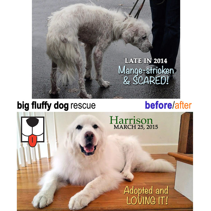 East Coast Asian Dog Rescue, Inc. - Rescue Dog