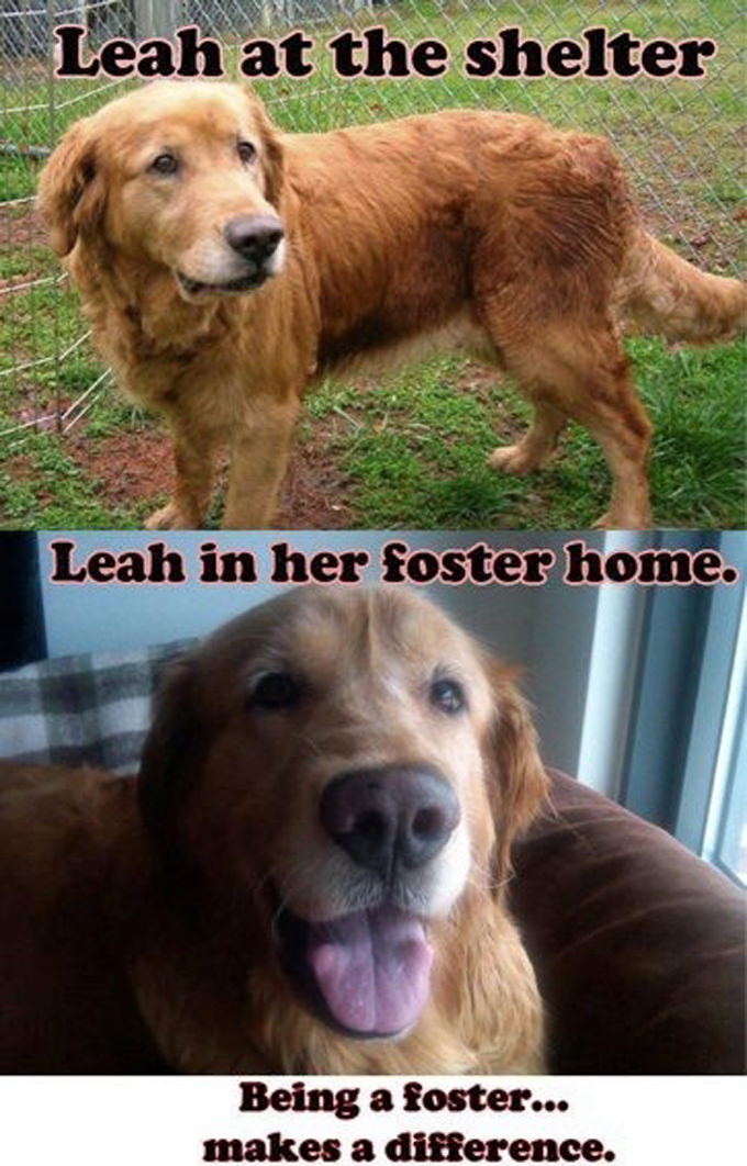 Heather Ragan - Rescue Dog