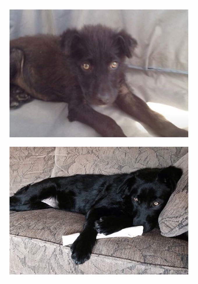 Midnight & Marco - Rescue Dog