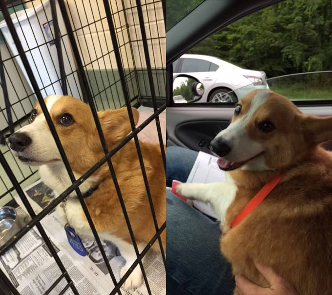 Arfnets – East Tennessee - Rescue Dog