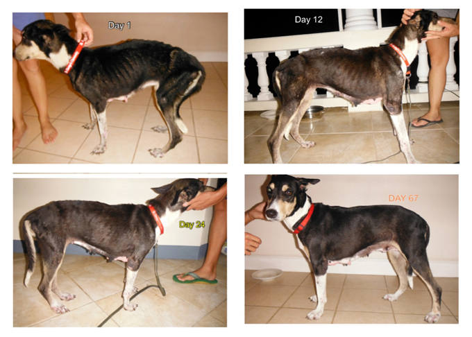 Ga Canine Rescue And Rehabilitation - Rescue Dog
