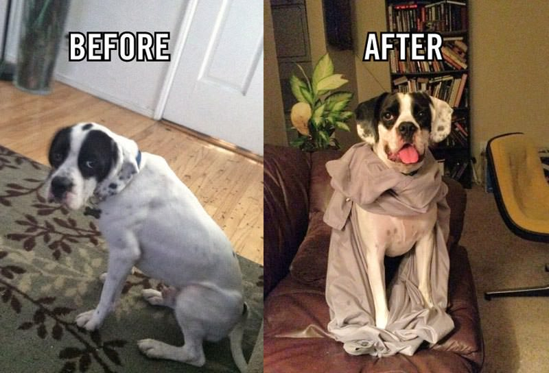 Great Dane Rescue Of Sc - Rescue Dog